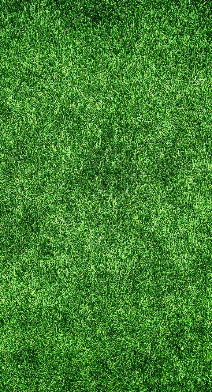 Jak zadbać o nasz trawnik wokół domu