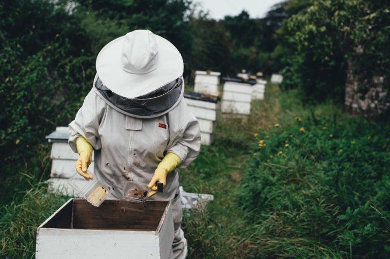 Wyjątkowy styczeń i grudzień w pasiecie zalecenie pszczelarskie.