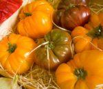 Najważniejsze informacje związane z przechowywaniem pomidorów