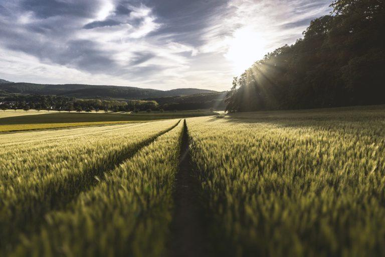 Praktyczne informacje i porady dla rolników – czy są dostępne on-line?