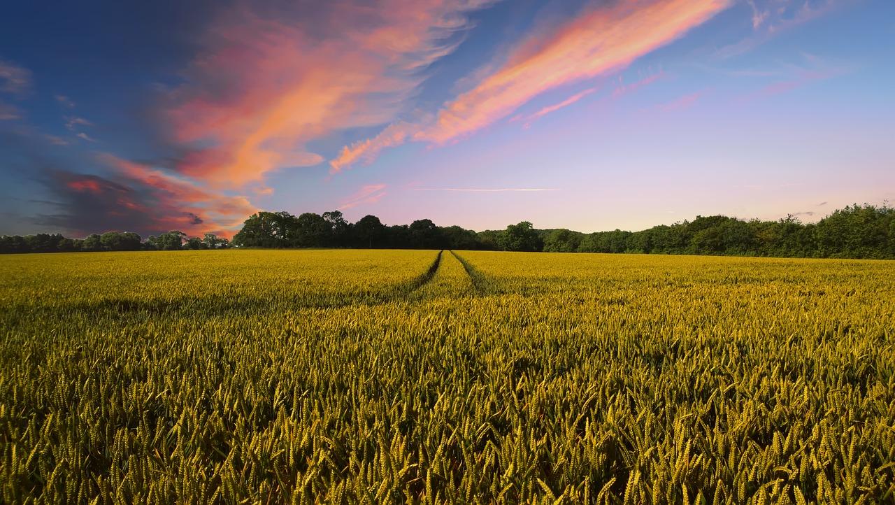 Ochrona pszenicy na najwyższym poziomie